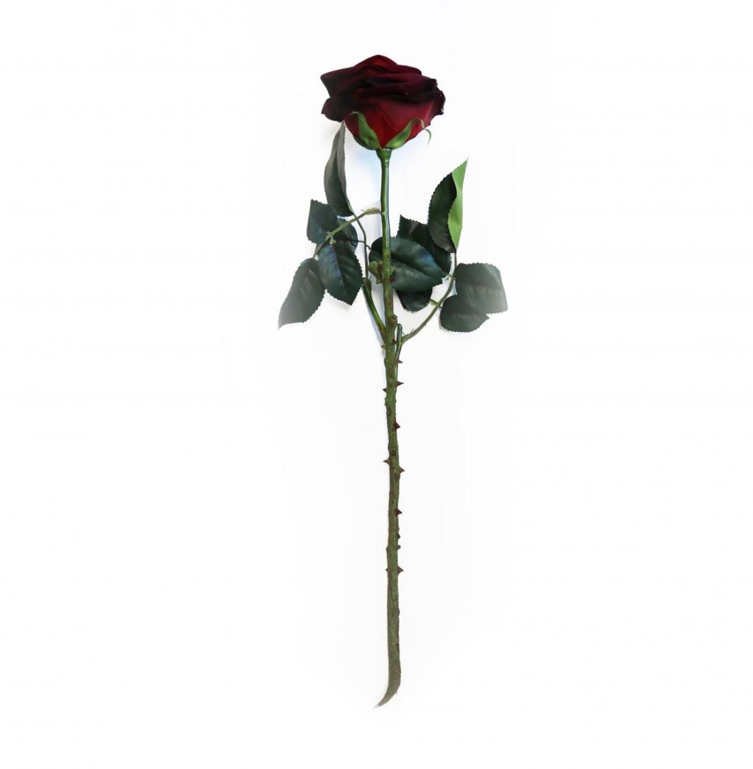 Samt Rose 326844-2 PM0018