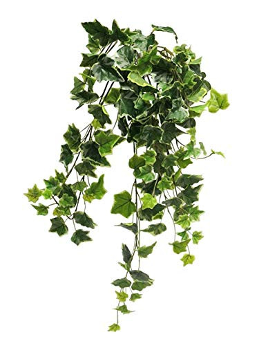 Hängepflanze Efeu Efeubusch Efeuranke Kunstefeu Hängepflanze Pflanzenhänger Kunstpflanze Kunst Pflanze künstlich unecht grün-gelb 60 cm 31007-2 F43