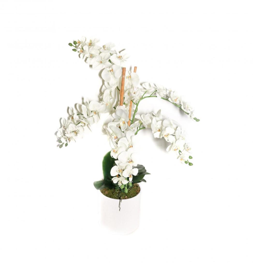 Orchidee - Weiss- 5 Rispen - Getopft OrchideeXXL-PM0039