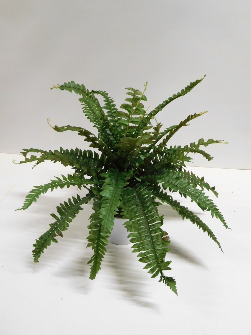 Boston Farn Bostonfarn Grünpflanze Kunstpflanze 50 cm TC-82932 getopft F71