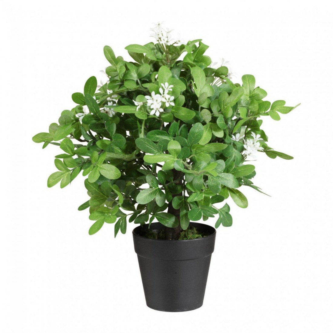 Orangenraute Jasmin Kugelbaum Kunstpflanze Kunst Pflanze Deko Dekopflanze Topfpflanze Zimmerpflanze Blattpflanze Grünpflanze Kunstblume Blume künstlich unecht Topf grün 45 cm getopft 334272-50 F82